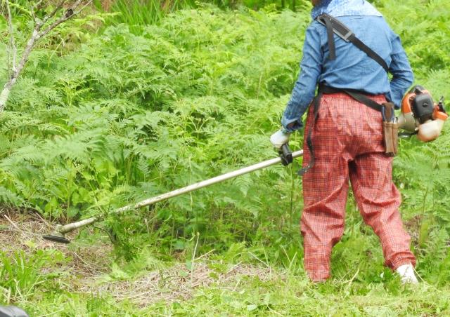 中城村で草刈りにかかる料金相場は?追加料金や業者選びのコツまで解説