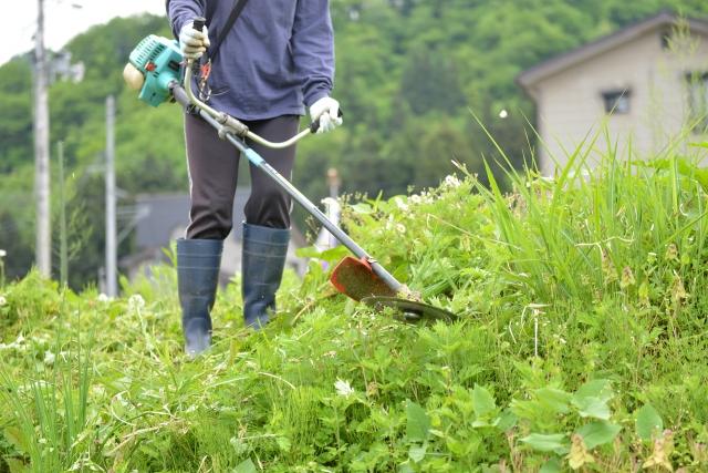 那覇市で草刈りに最適な年3回の時期~楽に草刈りを終えるコツまで徹底解説